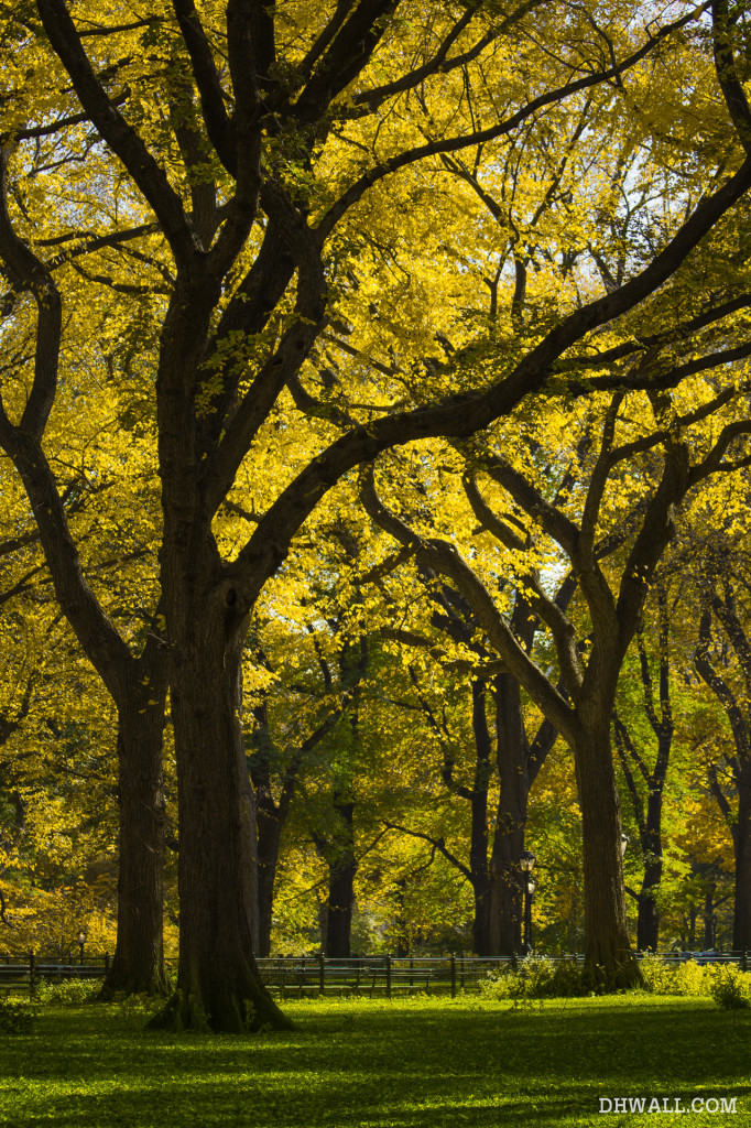 Central Park Fall Foliage Photo
